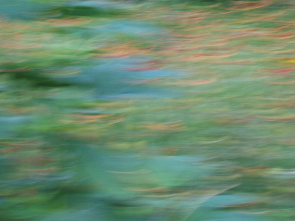abstract photo in greens and blues