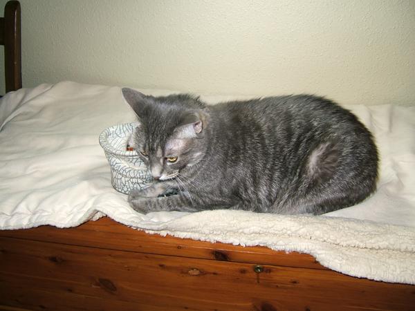 cat with raku pot