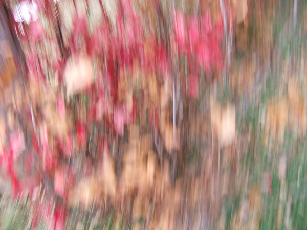 blur photo of red and gold spangles